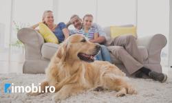 Cum să-ți amenajezi locuința când ai animale de companie?!